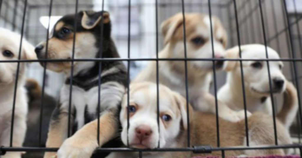 Australia Shoots Rescue Dogs Dead To Keep People Indoors