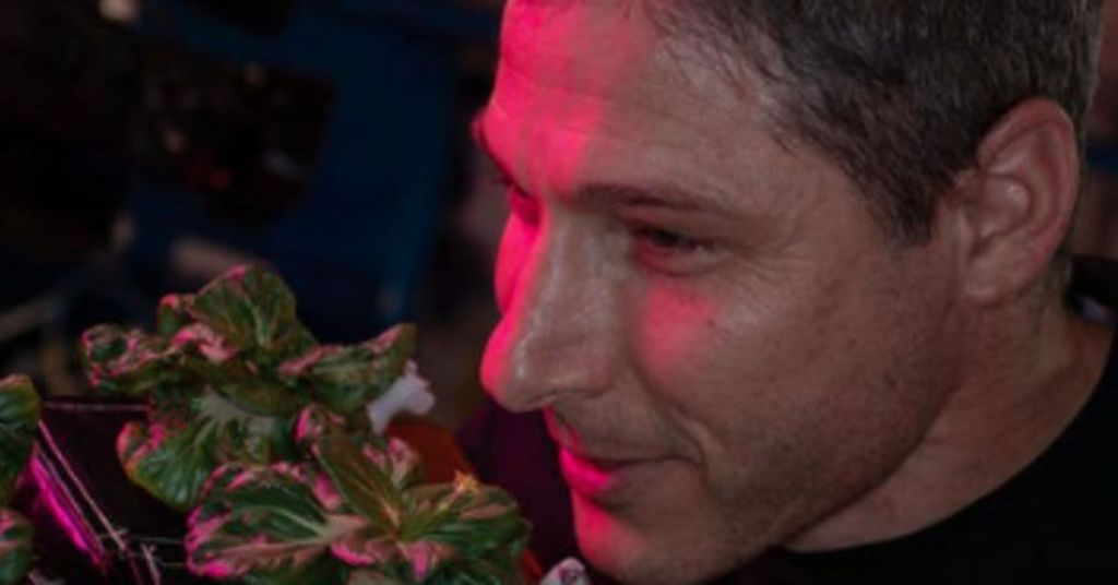 In A First, NASA Astronauts Now Growing Their Own Salads On Space Station