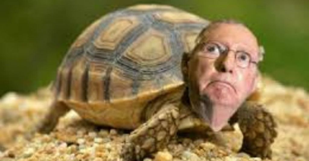 Turtle Bullsh*t: Does Mitch McConnell Really Expect Us To Believe This?